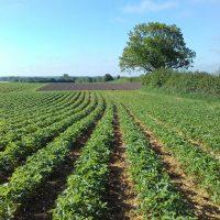 Bio-Gemüse im Freiland