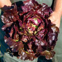 Bio-Salat