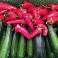 Paprika und Zucchini in Bio-Qualität