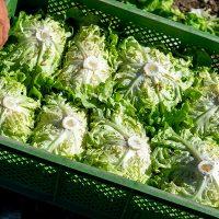 Bio-Salate